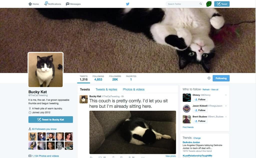 TheCatTweeting On Twitter